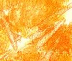 Phlebiopsis ravenelii,cystides
