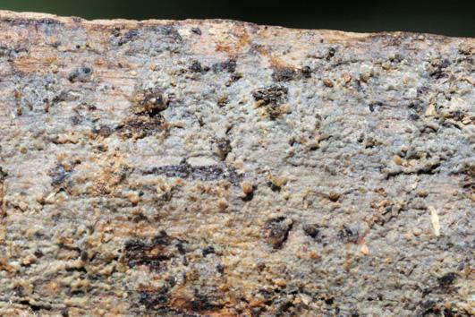 Basidiome résupinée, hyménophore généralement gris avec une teinte bleuâtre, subgélatineux à cérace quand il est frais, crustacé quand sec.Marge indéterminée. Sur conifères et sur bois mort de feuillus.