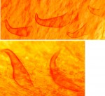 Inonotus triqueter soies