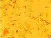 Dacryobolus karstenii, spores.